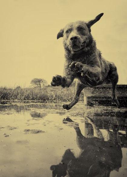 Fotografowanie zwierząt