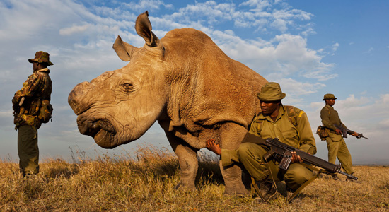 Brent Stirton Reportaż Getty Images